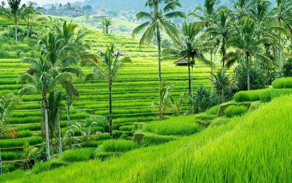 Optional Stopover in Ubud
