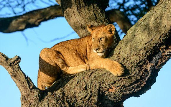 Safari Through Incredible Tanzania