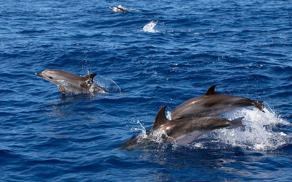 Whale and Dolphin Watching Excursion