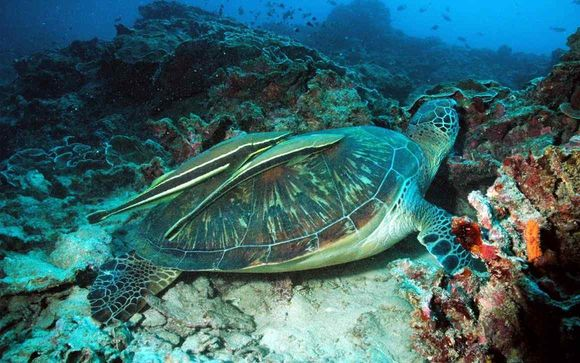 Coucher du soleil sur les plages du nord et sanctuaire des tortues
