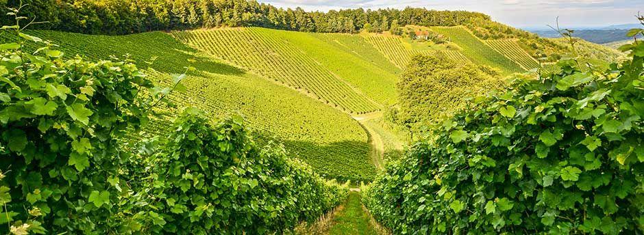 Week-ends en Bourgogne