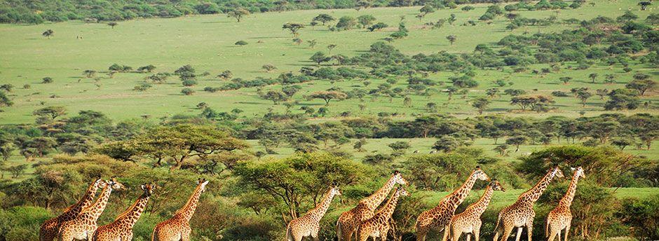 Envolez-vous en terres sauvages pour un safari en Tanzanie